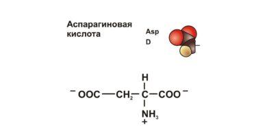 Аспаргиновая кислота